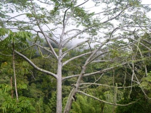 Kokoda-Trekking-Trek-1170-197